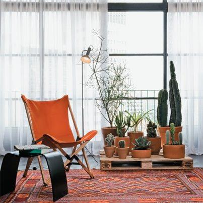 cactus na sala de estar