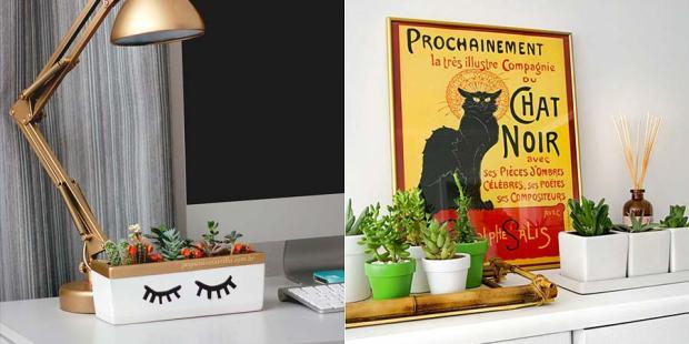 decoracao-plantas-suculentas-002